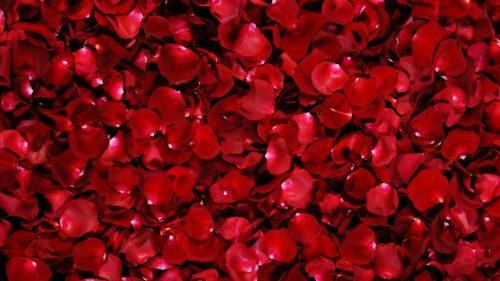 Banhos de rosas vermelhas