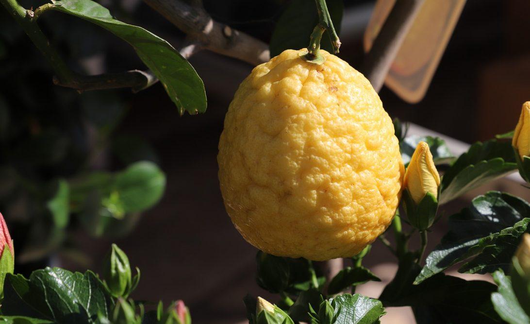 Simpatia do limão para separar casal