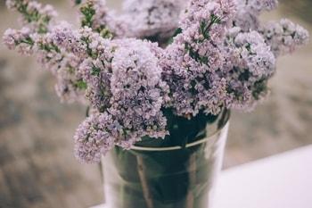 Simpatia para amor com papel na planta