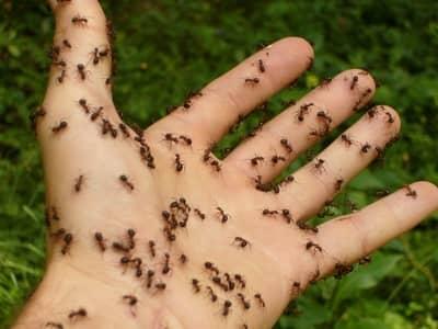 o que significa formiga na macumba