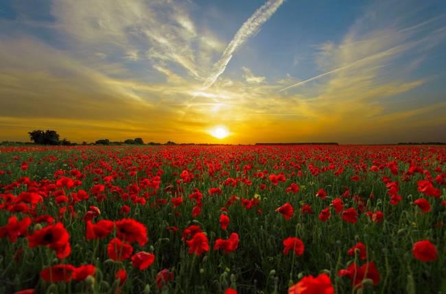 Ter um bom dia com nascer do sol