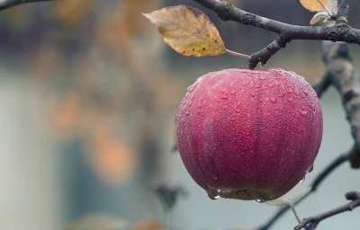 maçã para simpatia de perdoar