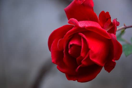 Oferenda para Pomba Gira Rosa Caveira