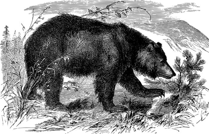 Entenda a carta do Urso na saúde e no trabalho