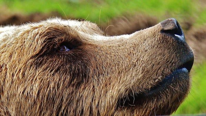 O que indica o Urso no Baralho Cigano do amor?