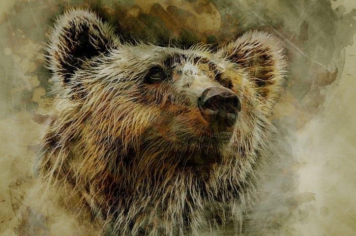 Qual é o significado da carta 15 (o Urso) no Baralho Cigano?