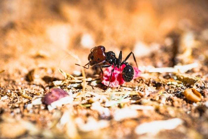 O que significa a formiga na macumba? Veja seu significado espiritual!